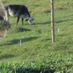 são 90 ninhos de corujas buraqueiras neste terreno,