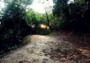 parque-dos-bufalos-614x433